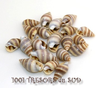ESCARGOTS • 20 PERLES COQUILLAGES • 17 mm